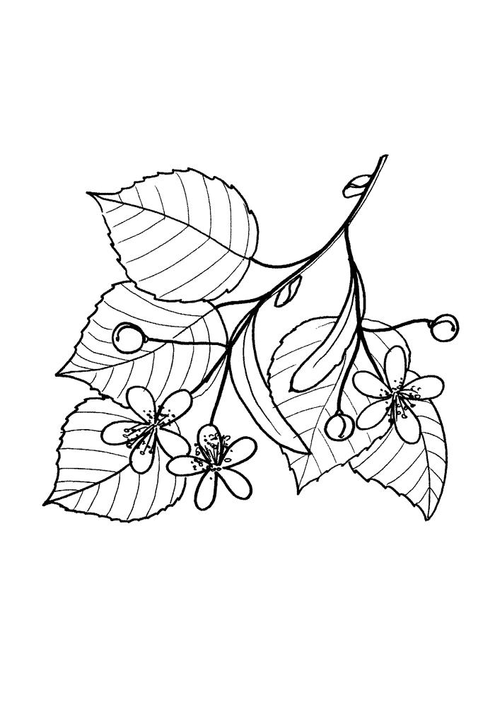 Lindblommor Målarbilder Målarbilder Löv i träden