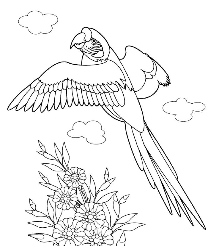 Pelican Målarbilder Målarbilder fåglar