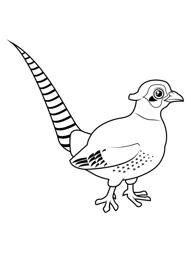 Fasan Målarbilder Målarbilder fåglar