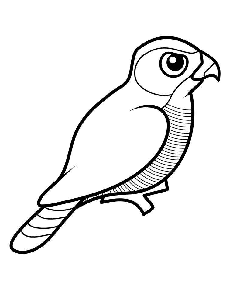 Hawk Målarbilder Målarbilder fåglar