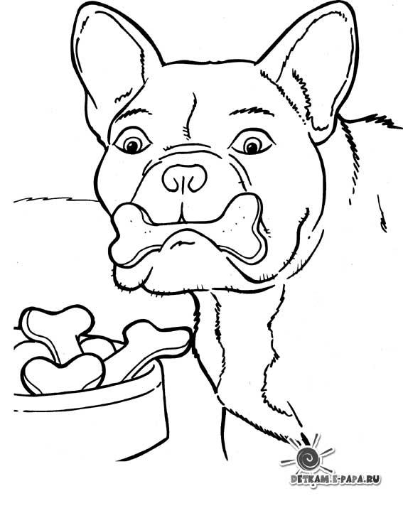 Hund med ben Målarbilder Målarbilder Hundar